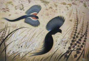 Widow Birds