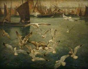 Gulls, Newlyn Harbour