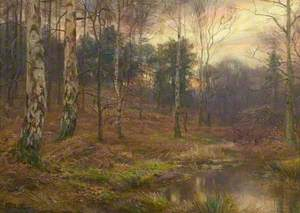 Evening in the Wood
