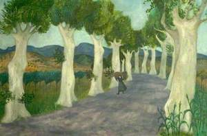 Plane Trees near Prades, France