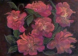 Francesca's Camellias