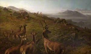 Red Deer, Early Morning