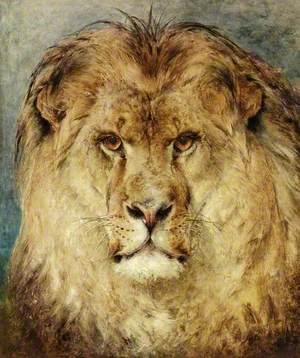 A Lion's Head