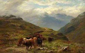 Highland Cattle, a Mountain Road, near Ballachulish, Argyll
