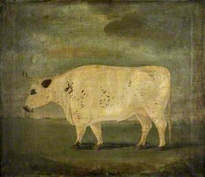Teesdale Ox