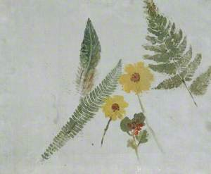 Sketch of Flowers and Ferns