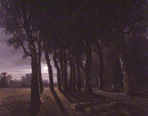 Moonlight in the Forest