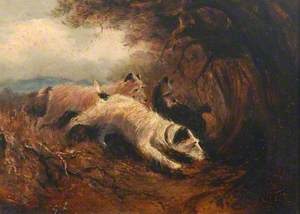 Hunt Terriers