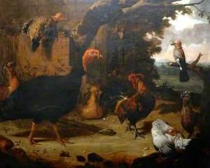 Farmyard Scene, the Black Turkey