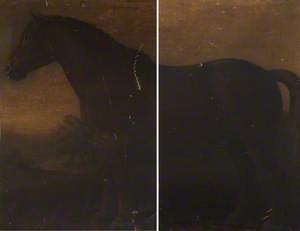 Suffolk Punch Stallion