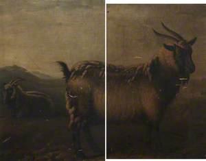 Brecon and Glamorgan Highland Goats