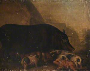 Siamese Sow and Piglets