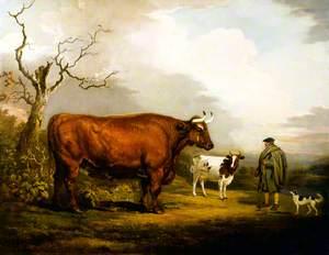 The Spottiswoode Ox