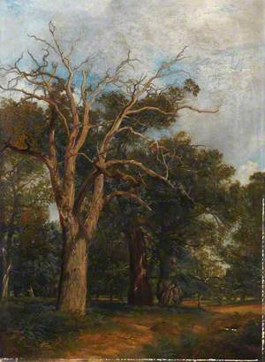 Study of Oak Trees in the Forest of Arden, Warwickshire