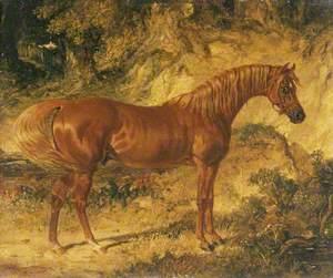 The Racehorse 'Actaeon'