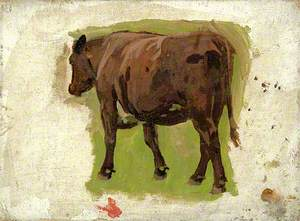A Brown Cow
