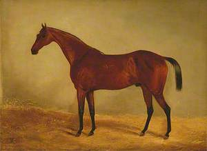 Study of the Horse 'West Australian', Winner of the Derby and St Leger 1853