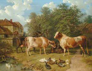 Cattle and Ducks