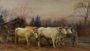 White Oxen, Baron Robert's Estate, Chantilly