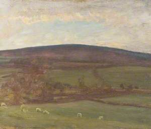 Withypool Hill, Exmoor, Sheep in the Foreground