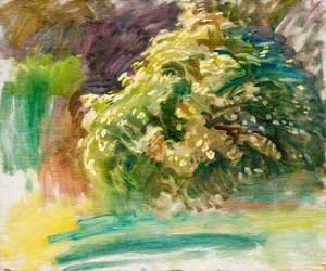 A Study of Blossom