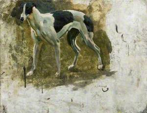 Study of a Black and White Greyhound