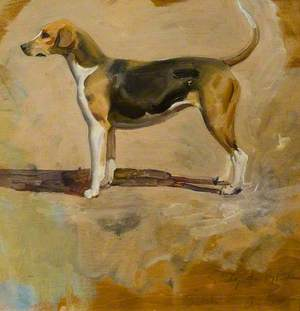 Study of a Foxhound, 'Pytchley'