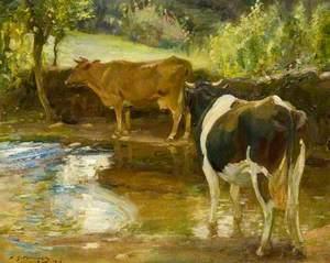 Cows at Water, Lamorna