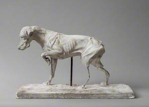 Anatomical Model of a Dog