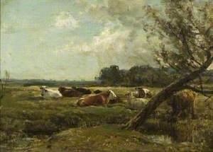 Cattle Resting in Marshland