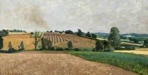Harvest Fields, Duton Hill, near Dunmow