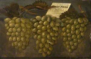 Three Bunches of First Prize Green Grapes