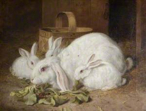 Four White Rabbits