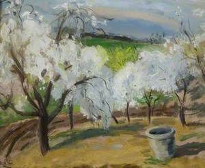 Cherry Blossom, Boxted