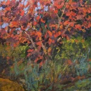 Autumn Acer, Benington Lordship (Hertfordshire)