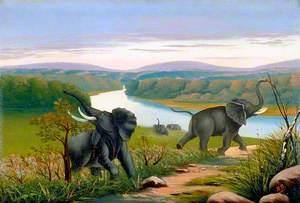 Elephant Shooting on the Kwanga River