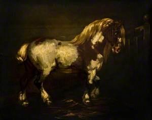 A Piebald Stallion