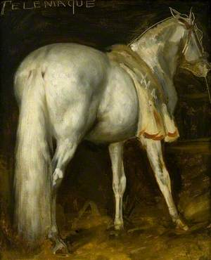 The Grey Horse 'Telemachus'