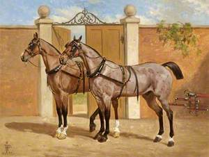 Horses Showing Harness