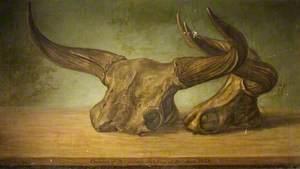 The Melksham Ox