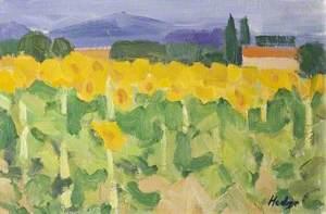 Sunflowers, Dordogne, France