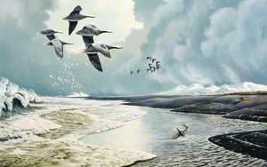 Emperor Geese in Bristol Bay, USA
