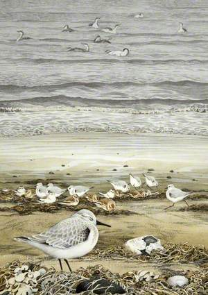 Sanderling and Snow Bunting with Red-Throated Divers
