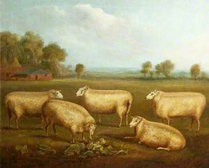 Five Leicester Sheep