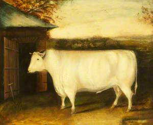 The Famous Early Bull: Property of Robert Collings of Barmpton, Darlington