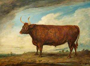 The Devonshire Ox
