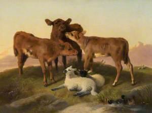 Calves and Lambs