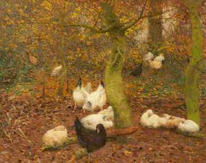 Poultry in a Wood