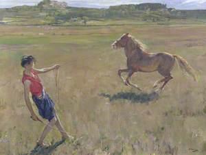 Schooling the Pony