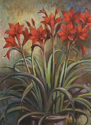 Scarborough Lilies
